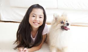 all care animal hospital veterinarian in minneola fl usa home