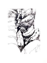 cassia kite