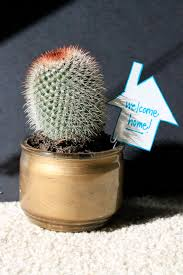 Traditional Housewarming Gifts by A Cool Cactus Housewarming Gift Aka Ke Ha The Kactu
