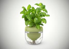 kitchen beautiful green fresh basil for hydroponic kitchen garden