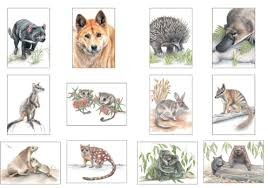 cards mini size animals gift boxed set of 12 australian wildlife