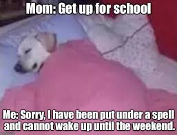 Dog In Bed Meme - sleeping dog imgflip