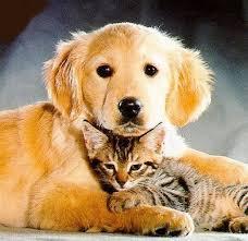 Cómo adaptar un gato cachorro con un perro adulto. Images?q=tbn:ANd9GcQYH68XhKTd_dWHSySOIE8B2TOGLgBDBsqalUKYpwNm4lp0Rx8&t=1&usg=__HiBCYW1tiC8zP1HdRHSMo4MYhGw=