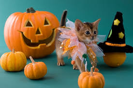 Kitten Costumes Halloween Halloween Kittens U2013 Festival Collections
