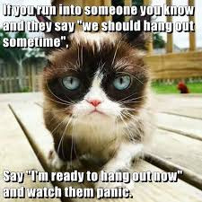 Meme Cheezburger - panic http cheezburger com 9055496704 grumpy cat pinterest