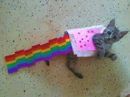 Nyan Cat Meme - nyan cat lives nine cute real live nyan cats petslady com