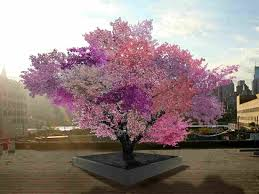 the gift of graft new york artist s tree to grow 40 kinds of
