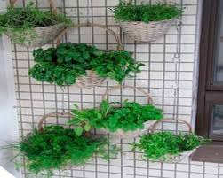 learn to make a hanging garden step to health