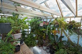 testimonials from the greenhouse catalog customers