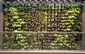Vertical Wall Garden Plants by Inner City Nature Green Walls And Vertical Gardens Inner City Nature