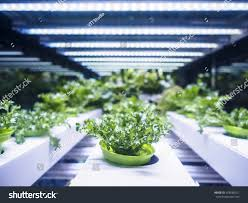 greenhouse plant row grow led light stock photo 478588321