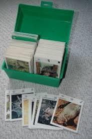 wildlife treasury cards shannon born december 17 1984 in arizona usa