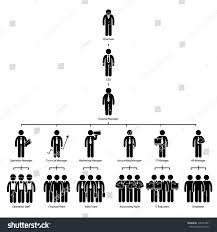 organization chart tree company corporate hierarchy stock vector