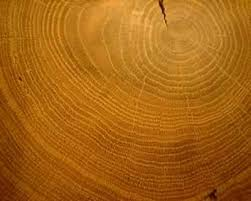 wood tree rings images Dendrochronology jpg