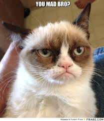 Mad Kitty Meme - you mad bro grumpy cat pinterest grumpy cat and bro