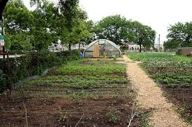 Soup Kitchens In Chicago by Vegetable Garden At Cook County Jail In Chicago U2014 City Farmer News