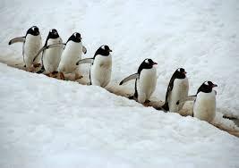 cute penguin backgrounds wallpaper cave