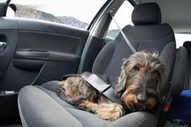 gerüche entfernen gerüche aus dem auto entfernen autopflege 2017