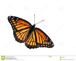 monarch butterfly stock image image of summer 218939