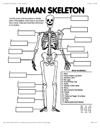 skeleton coloring coloring pages blood answer key