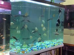 sb reef lights review sb aquarium agartala bazar aquariums in agartala justdial