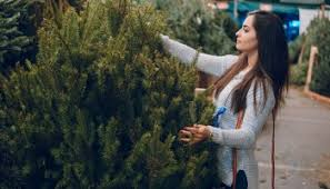 Christmas Tree Shopping Tips - christmas tree buying tips agnet west