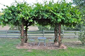 diy trellis arbor how to build a grape trellis photo u2014 farmhouse design and