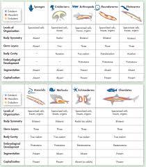 animal u0026 human development chapters biology at shaw high