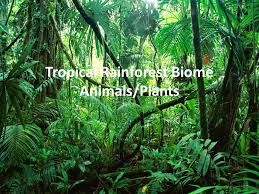 Plants In The Tropical Rain Forest - tropical rainforest biome animals plants ppt video online download