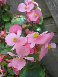poisonous plants for dogs u0026 cats trupanion