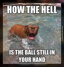 Confused Dog Meme - dogs are easily amazed very funny pics