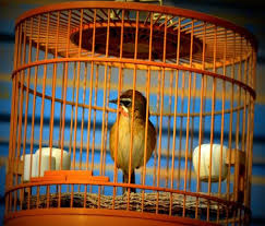 Birds In Your Backyard Bird Houses And Cages In Australia Coops And Cages