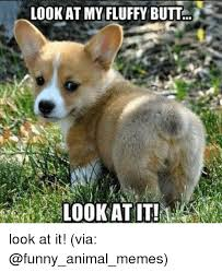 Funny Animals Memes - look at my fluffy butt look at it via animals meme on me me