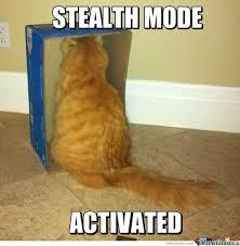 Stupid Cat Meme - stupid cat meme images quotesbae