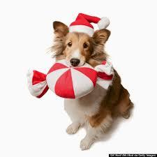 dog christmas christmas snacks and food that can harm your dog