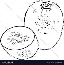 kiwi fruit for coloring book royalty free vector image