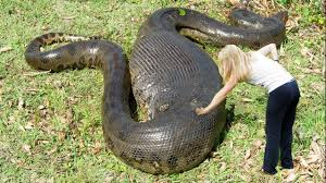 vidio film ular anaconda hd wallpapers pinterest d hd wallpapers pinterest green