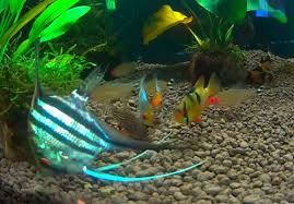 how to choose the best fish foods and feed your fish