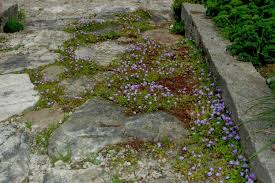 roche fleurie garden small but packing a punch