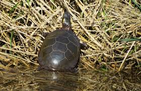 spirit halloween waterford lakes painted turtle time become a kid again u2013 oakland county blog