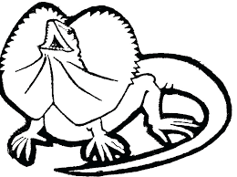 desert lizard coloring page lizard coloring lizard coloring pages printable lizard coloring
