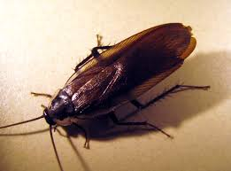 bed bugs pages pestmall blog