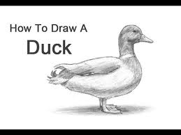 draw ducks pictures wikihow