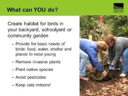 Birds In Your Backyard Bird Basics Ppt Video Online Download