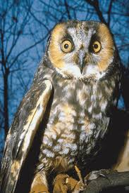 Scientific Name Of Barn Owl Owls Facts Science Trek Idaho Public Television