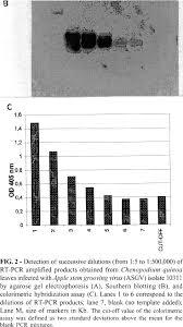 rt pcr elisa for detection of apple stem grooving virus in apple trees
