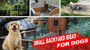 amazing small backyard ideas for dogs youtube