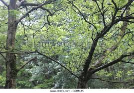 Decorative Trees In India Decorative Trees Stock Photos U0026 Decorative Trees Stock Images Alamy