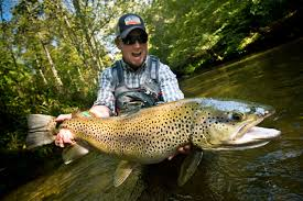 catch trophy brown trout by stacking the odds in your favor fly
