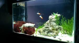 nano aquascape 11 inspirational reef aquascaping home design ideas